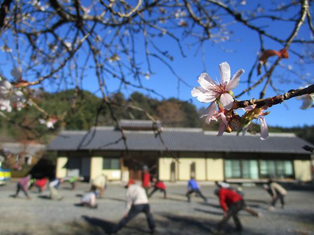 画像1: 12月4日に冬桜で有名なその名も 「桜山」 へ行って来ました♪