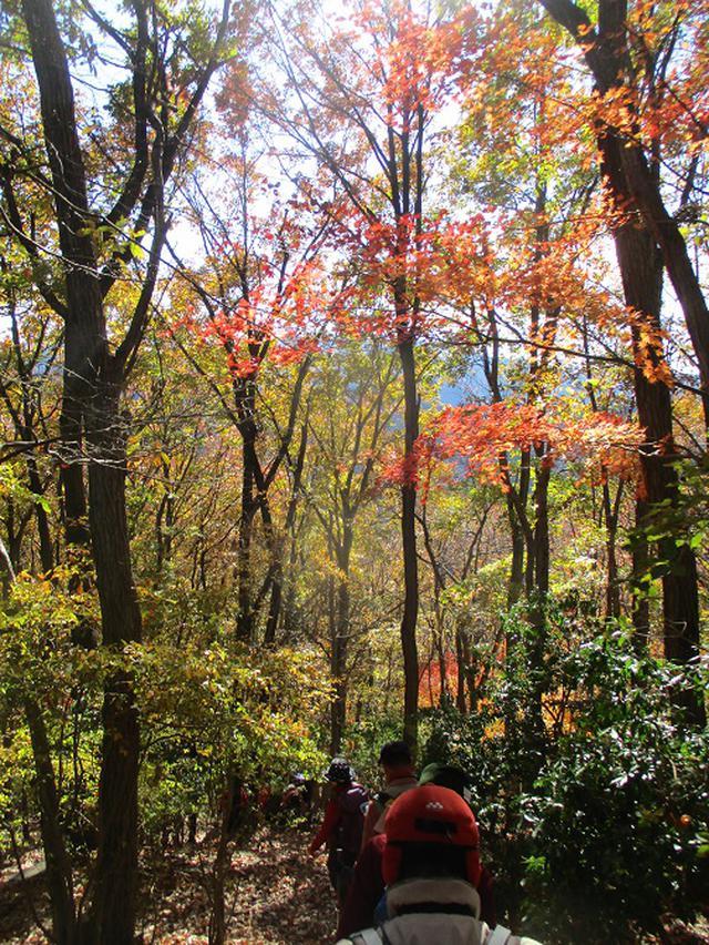 画像13: 12月4日に冬桜で有名なその名も 「桜山」 へ行って来ました♪