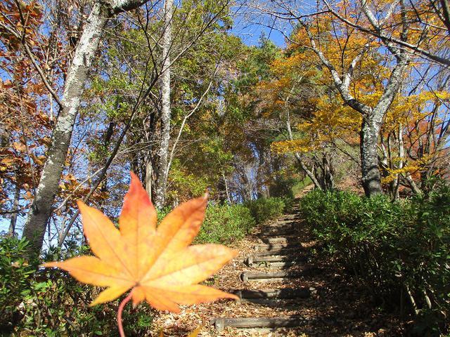画像8: 12月4日に冬桜で有名なその名も 「桜山」 へ行って来ました♪