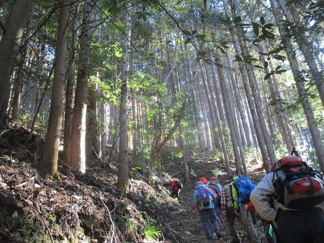 画像2: 12月4日に冬桜で有名なその名も 「桜山」 へ行って来ました♪