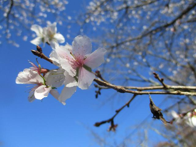 画像6: 12月4日に冬桜で有名なその名も 「桜山」 へ行って来ました♪