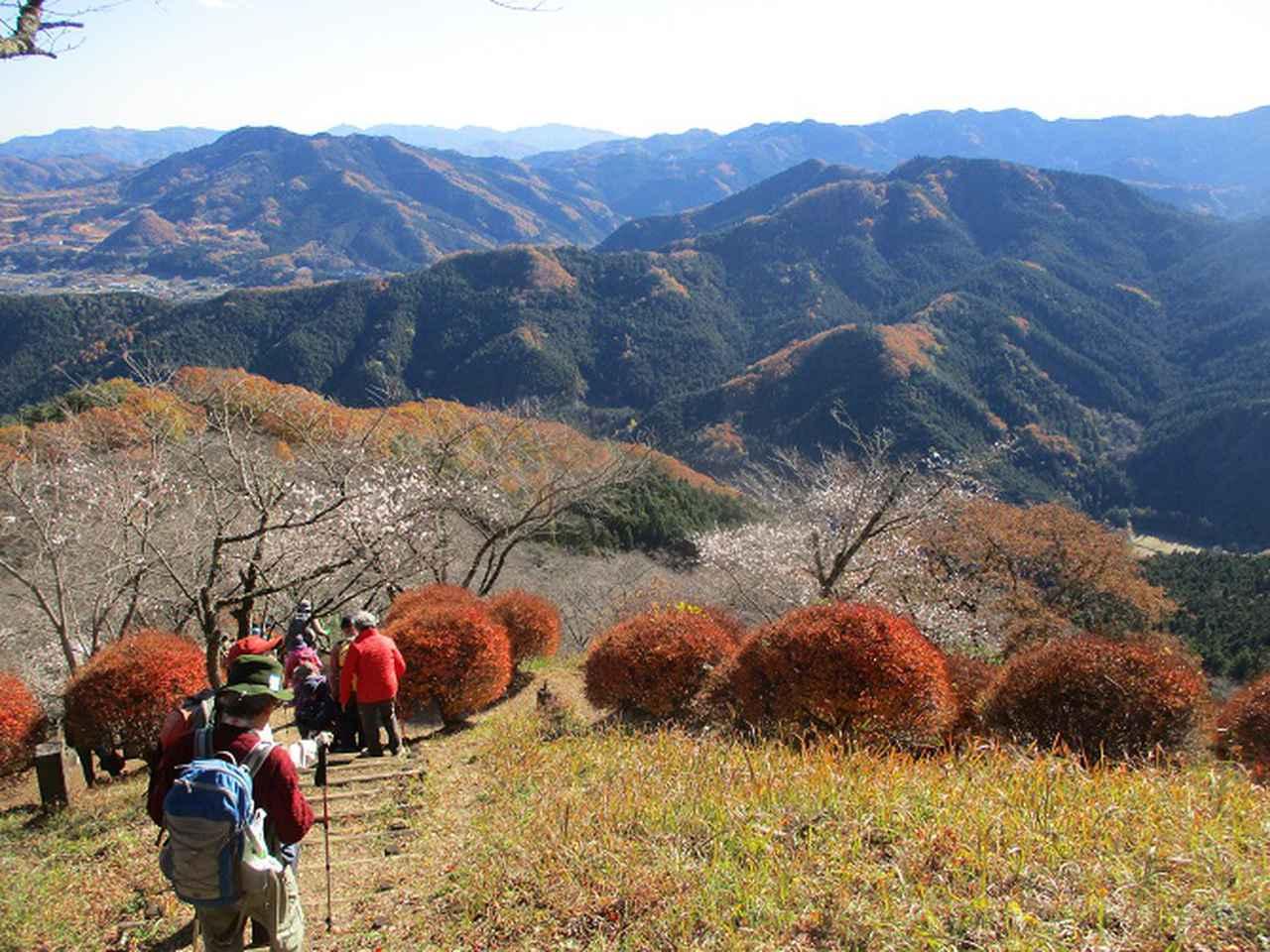 画像11: 12月4日に冬桜で有名なその名も 「桜山」 へ行って来ました♪