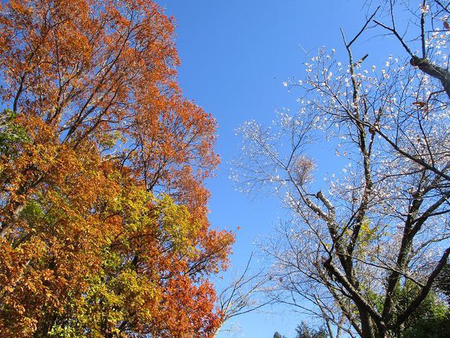 画像7: 12月4日に冬桜で有名なその名も 「桜山」 へ行って来ました♪