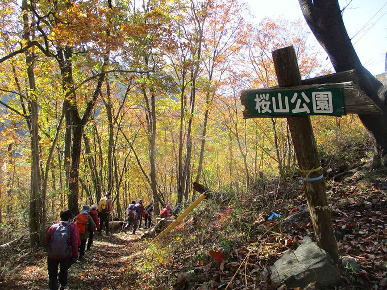 画像14: 12月4日に冬桜で有名なその名も 「桜山」 へ行って来ました♪