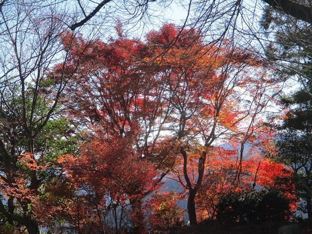 画像5: 12月4日に冬桜で有名なその名も 「桜山」 へ行って来ました♪