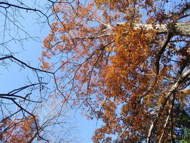 画像1: 先日12月14日に山旅会 東高尾山稜 ツアーに行ってきました!