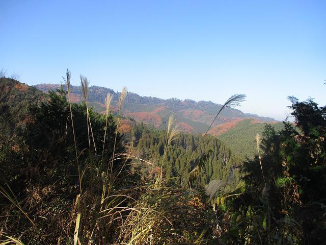 画像4: 先日12月14日に山旅会 東高尾山稜 ツアーに行ってきました!