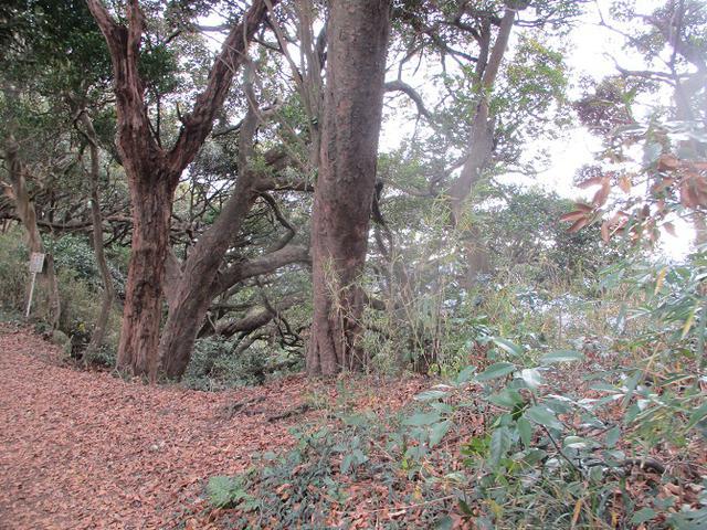 画像5: 12月21日に山旅会現地集合 「鷹取山」 ツアーに行ってきました!