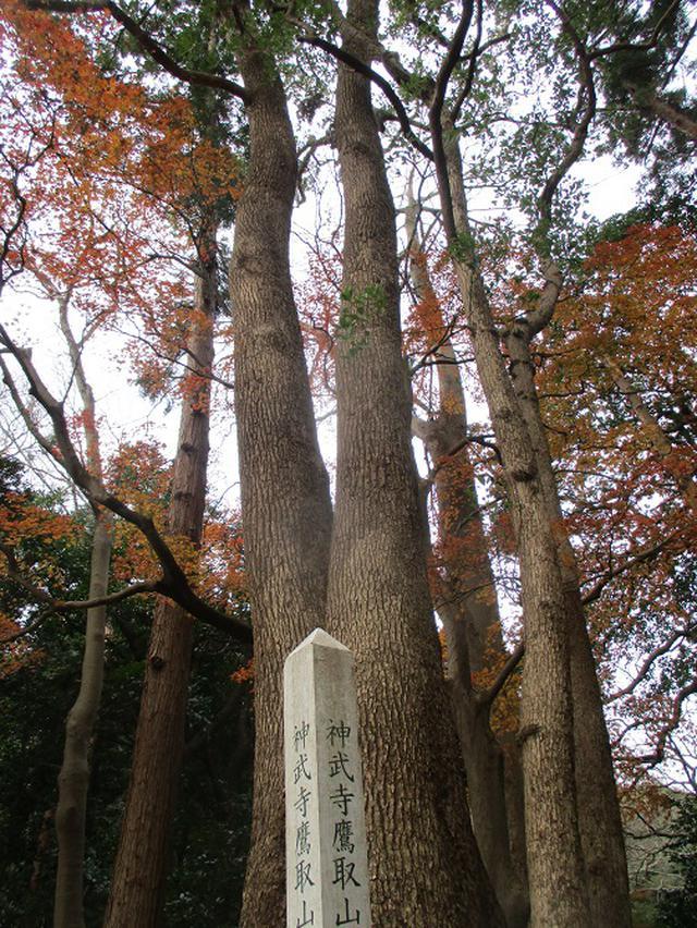 画像1: 12月21日に山旅会現地集合 「鷹取山」 ツアーに行ってきました!