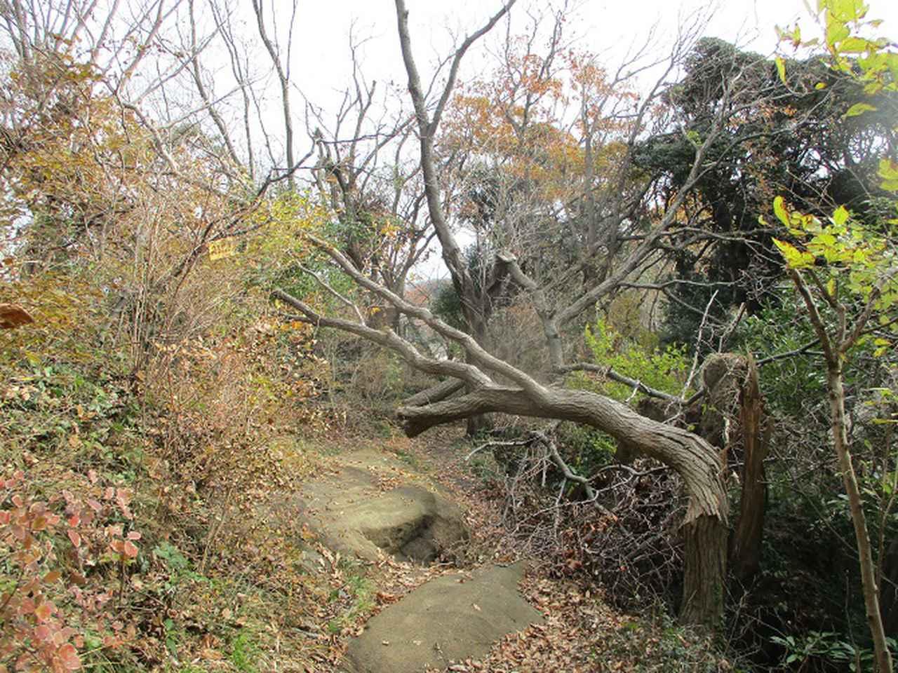 画像11: 12月21日に山旅会現地集合 「鷹取山」 ツアーに行ってきました!
