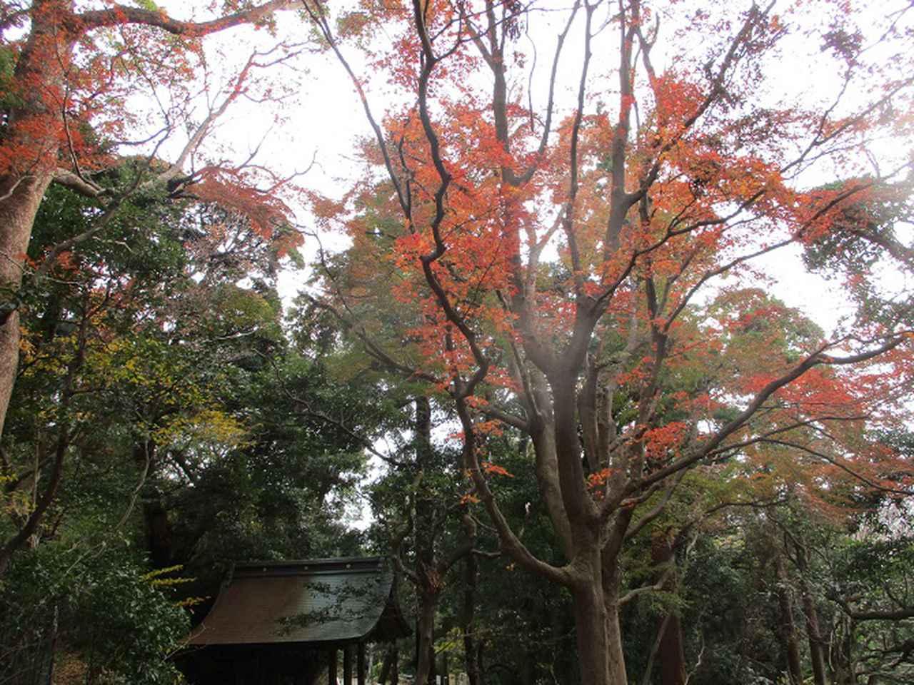 画像2: 12月21日に山旅会現地集合 「鷹取山」 ツアーに行ってきました!