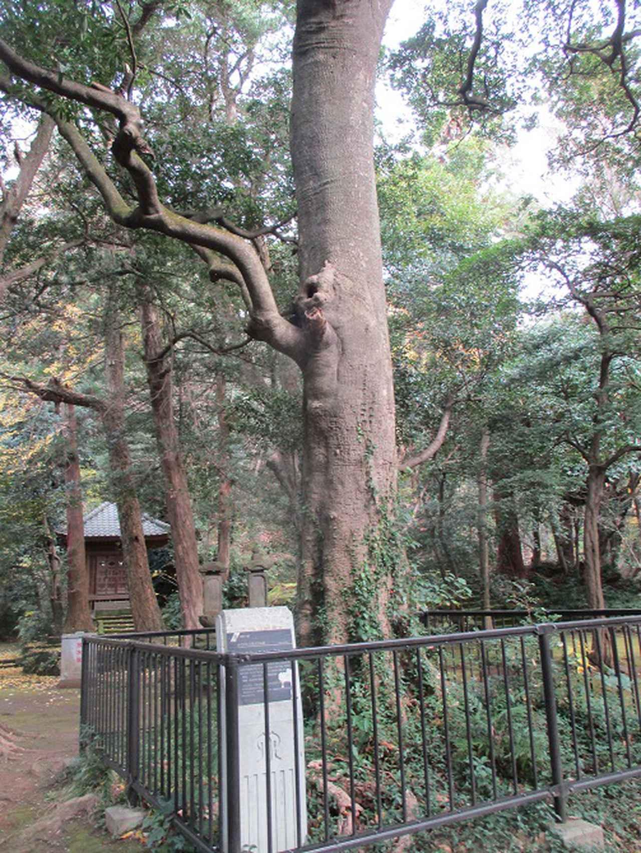 画像3: 12月21日に山旅会現地集合 「鷹取山」 ツアーに行ってきました!