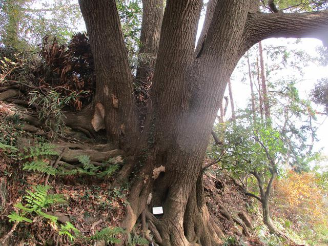画像12: 12月21日に山旅会現地集合 「鷹取山」 ツアーに行ってきました!