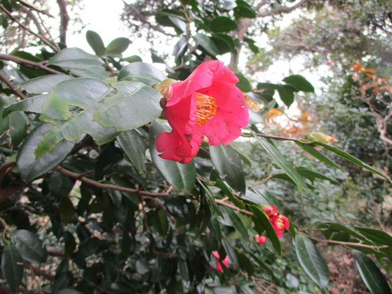 画像8: 12月21日に山旅会現地集合 「鷹取山」 ツアーに行ってきました!
