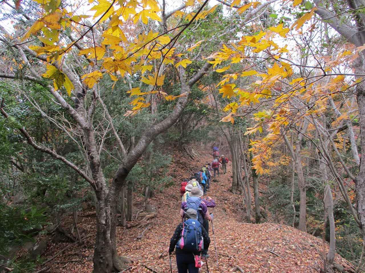 画像8: 12月13日に岡田ガイドのコースで 鐘ヶ岳 へ行ってきました♪