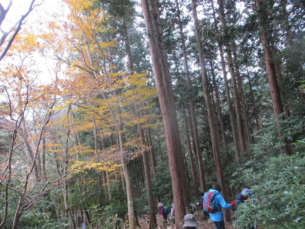画像5: 12月13日に岡田ガイドのコースで 鐘ヶ岳 ツアーに行ってきました!