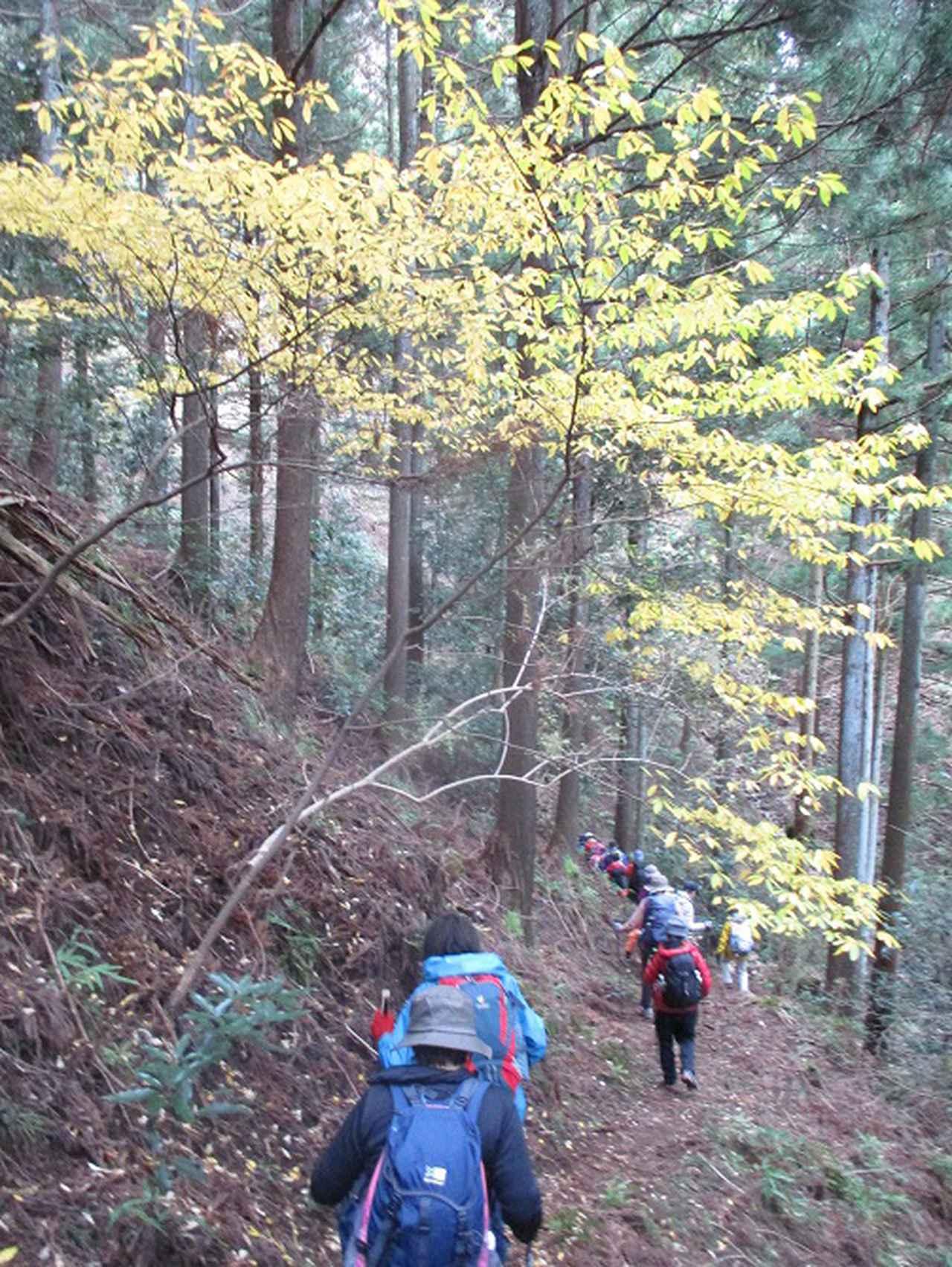画像7: 12月13日に岡田ガイドのコースで 鐘ヶ岳 ツアーに行ってきました!