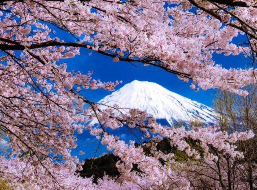 画像: 日帰りで気軽にを春の花々を楽しむ…バスまたは列車で行く日帰りツアー|クラブツーリズム