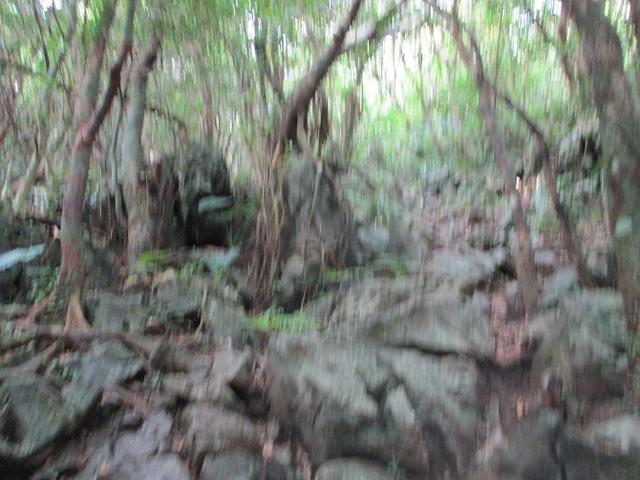 画像7: 1月の山旅会 「沖縄グスク巡り・伊江島城山・名護岳」 ツアーの下見に行ってきました!