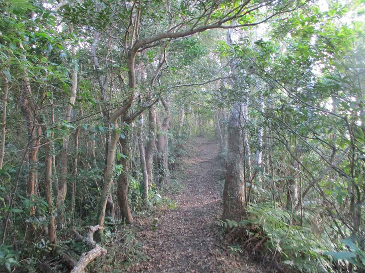 画像10: 1月の山旅会 「沖縄 グスク巡り・伊江島城山・名護岳」 ツアーの下見に行ってきました!