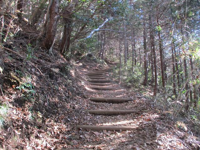 画像1: 12月29日と30日に山旅会現地ツアー 「城山から高尾山」 に行ってきました!