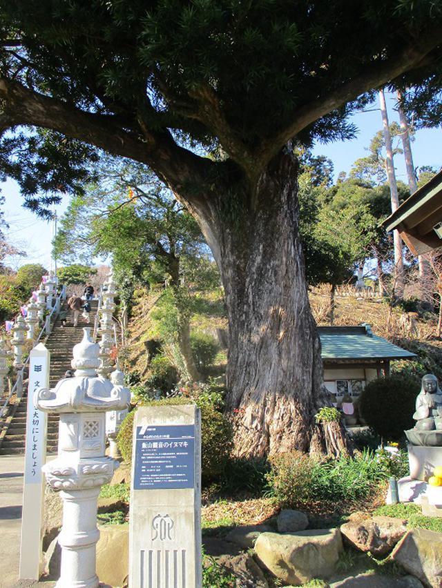 画像1: 丹沢白山の下見に行ってきました! (1月に現地集合ツアー、2月バス日帰りツアーがあります)