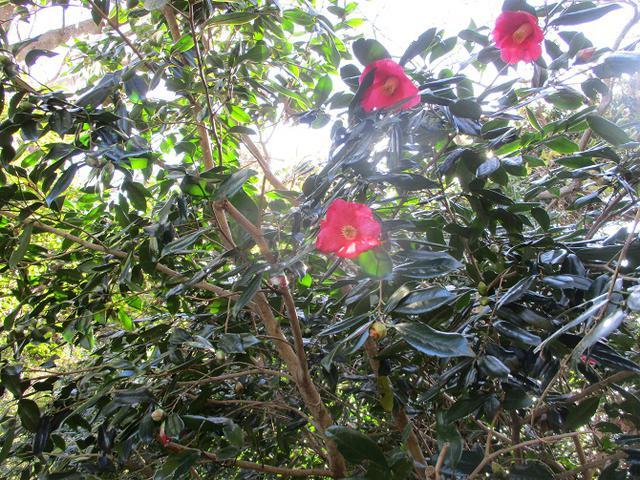 画像10: 1月の山旅会現地集合ツアー 「阿部倉山から二子山」 ツアーの下見に行ってきました!