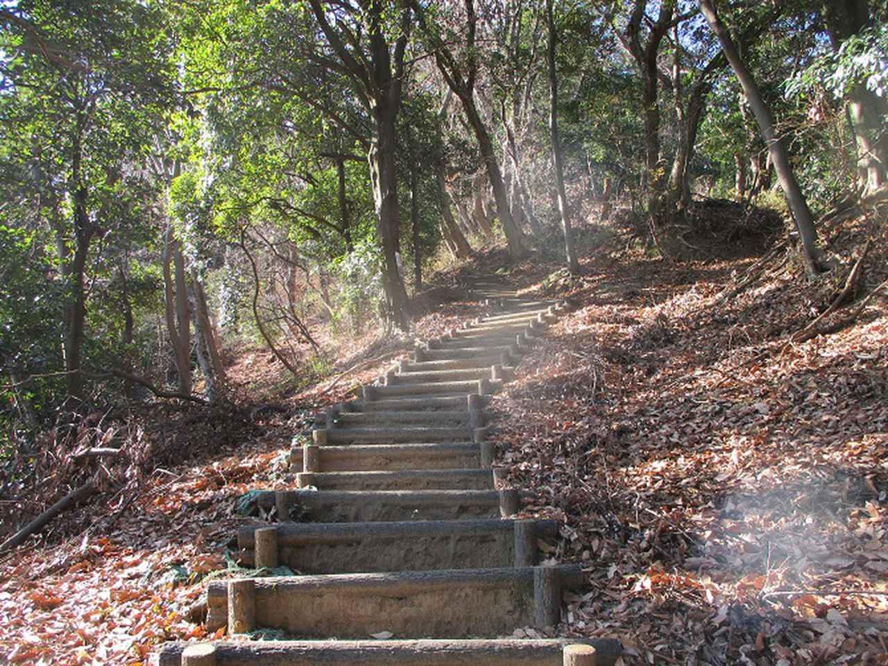 画像3: 丹沢白山の下見に行ってきました! (1月に現地集合ツアー、2月バス日帰りツアーがあります)