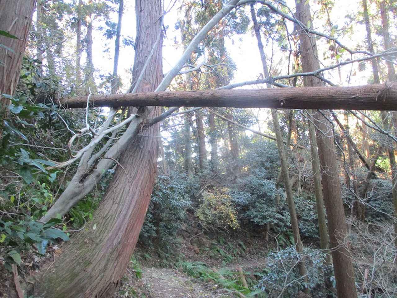 画像13: 1月の山旅会現地集合ツアー 「阿部倉山から二子山」 ツアーの下見に行ってきました!