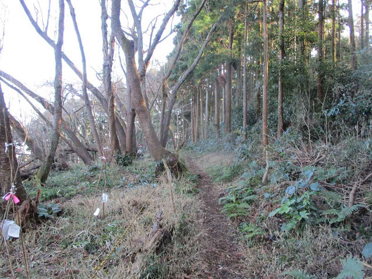 画像5: 1月の山旅会現地集合ツアー 「阿部倉山から二子山」 ツアーの下見に行ってきました!