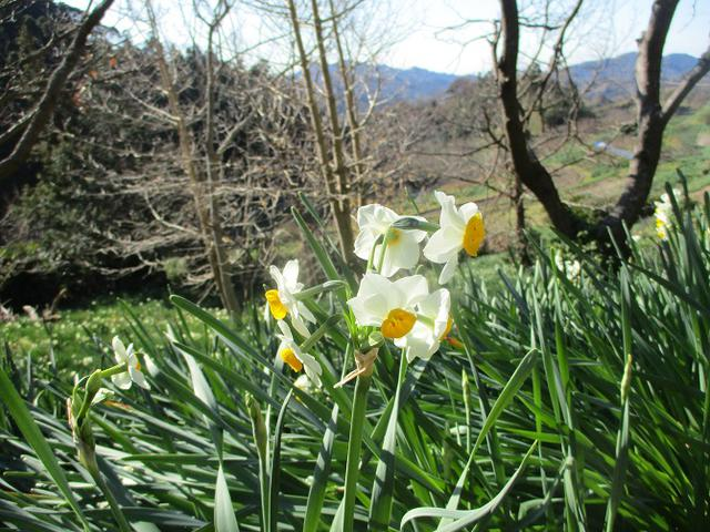 画像4: 1月の山旅会 「をくずれから津森山」 ツアーの下見に行ってきました!