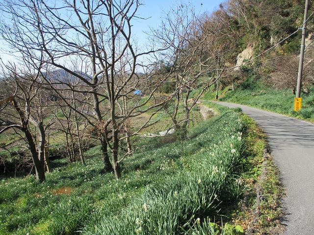 画像10: 1月の山旅会 「をくずれから津森山」 ツアーの下見に行ってきました!