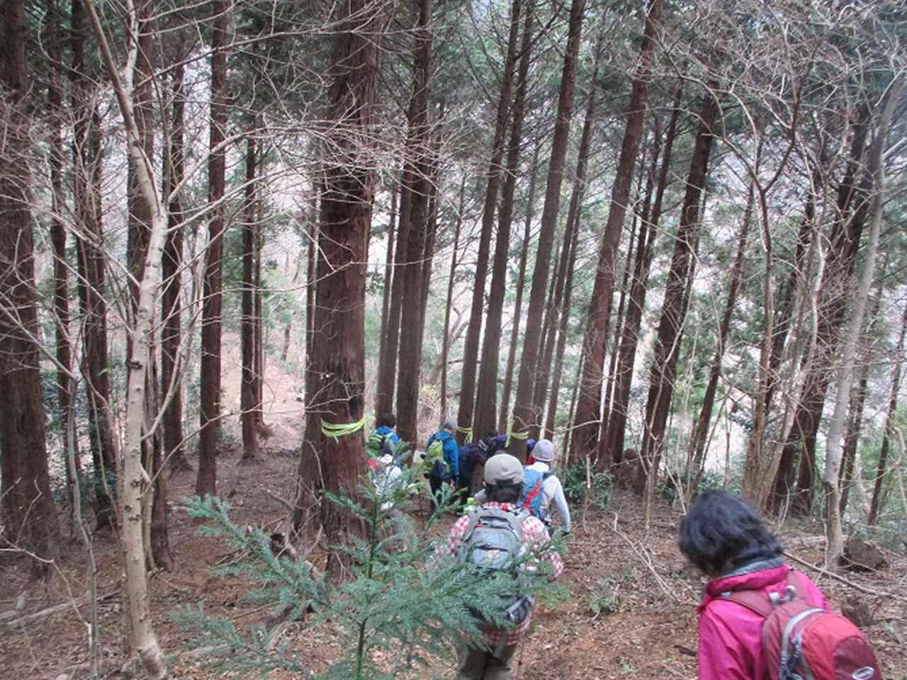 画像4: 1月7日に山旅会 「聖峰から高取山」 ツアーに行ってきました!
