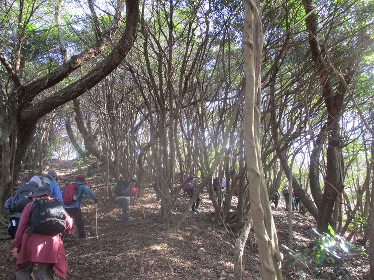 画像2: 1月10日に山旅会 神峰山から鞍掛山 ツアーに行ってきました!