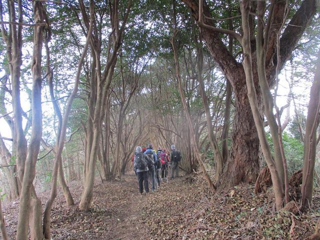 画像8: 1月10日に山旅会 神峰山から鞍掛山 ツアーに行ってきました!