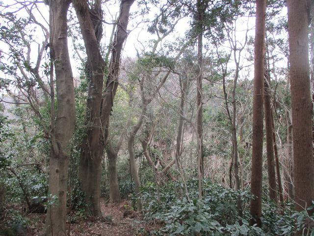 画像6: 1月11日に山旅会現地集合 阿部倉山から二子山 ツアーに行ってきました!