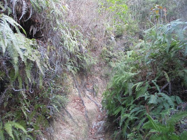 画像3: 来年の冬の企画素材を探して我が故郷・広島の山を歩いてみました!