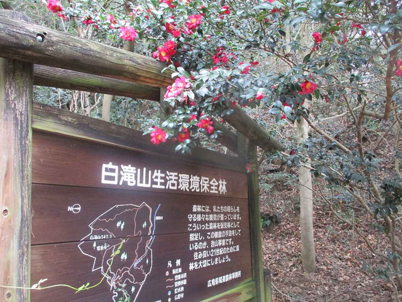 画像7: 来年冬の企画素材を探して、我が故郷・広島県の山を歩いてみました