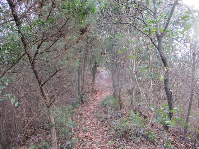 画像9: 来年冬の企画素材を探して、わが故郷・広島県の山を歩いてみました!