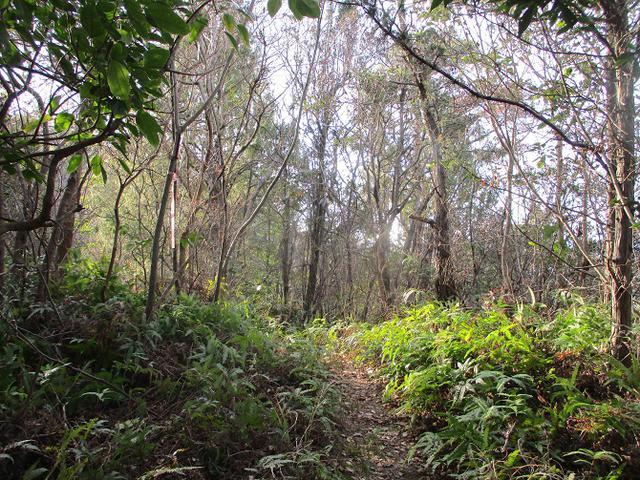 画像8: 来年冬の企画素材を探して、わが故郷・広島県の山を歩いてみました!