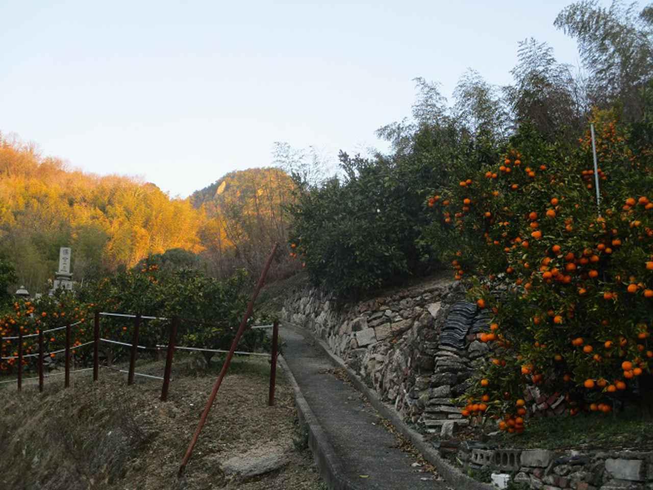 画像1: 来年の冬の企画素材を探して我が故郷・広島の山を歩いてみました!