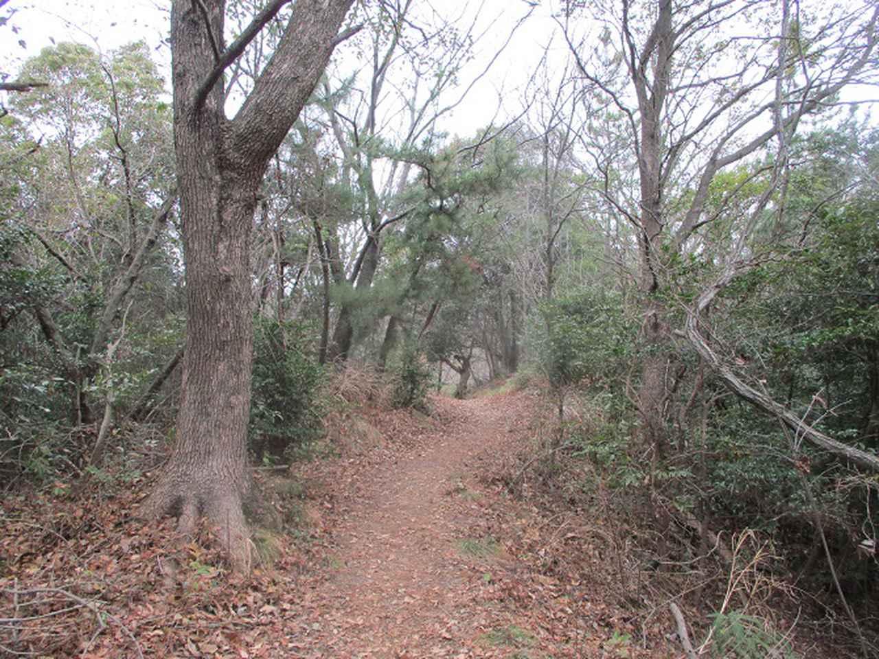 画像6: 来年冬の企画素材を探して、我が故郷・広島県の山を歩いてみました