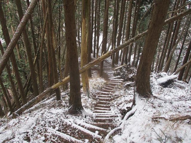 画像10: 来年冬の企画素材を探して静岡県の山を歩いてみました!