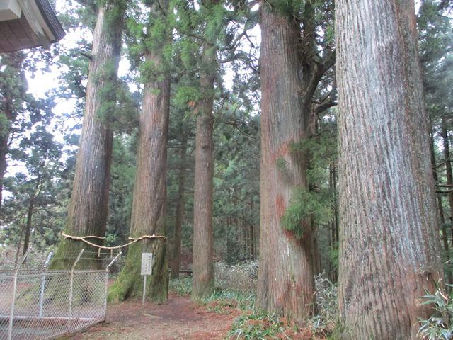 画像4: 来年冬の企画素材を探して静岡県の山を歩いてみました!