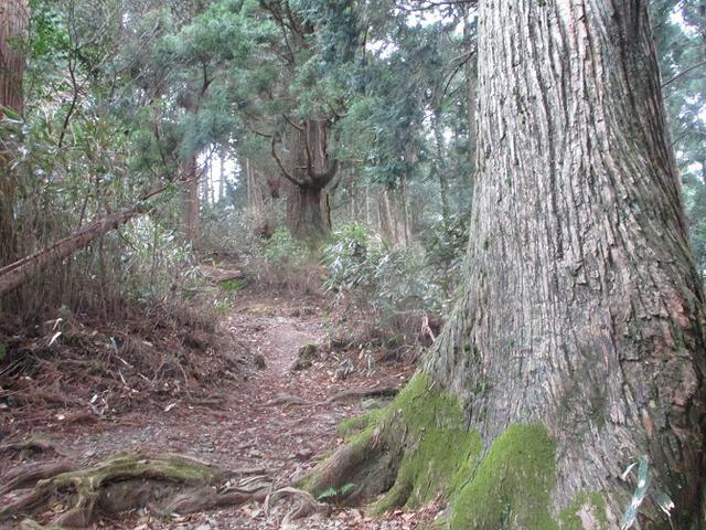 画像5: 来年冬の企画素材を探して静岡県の山を歩いてみました!