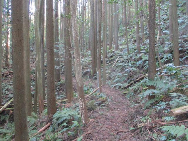 画像6: 来年冬の企画素材を探して静岡県の山を歩いてみました!