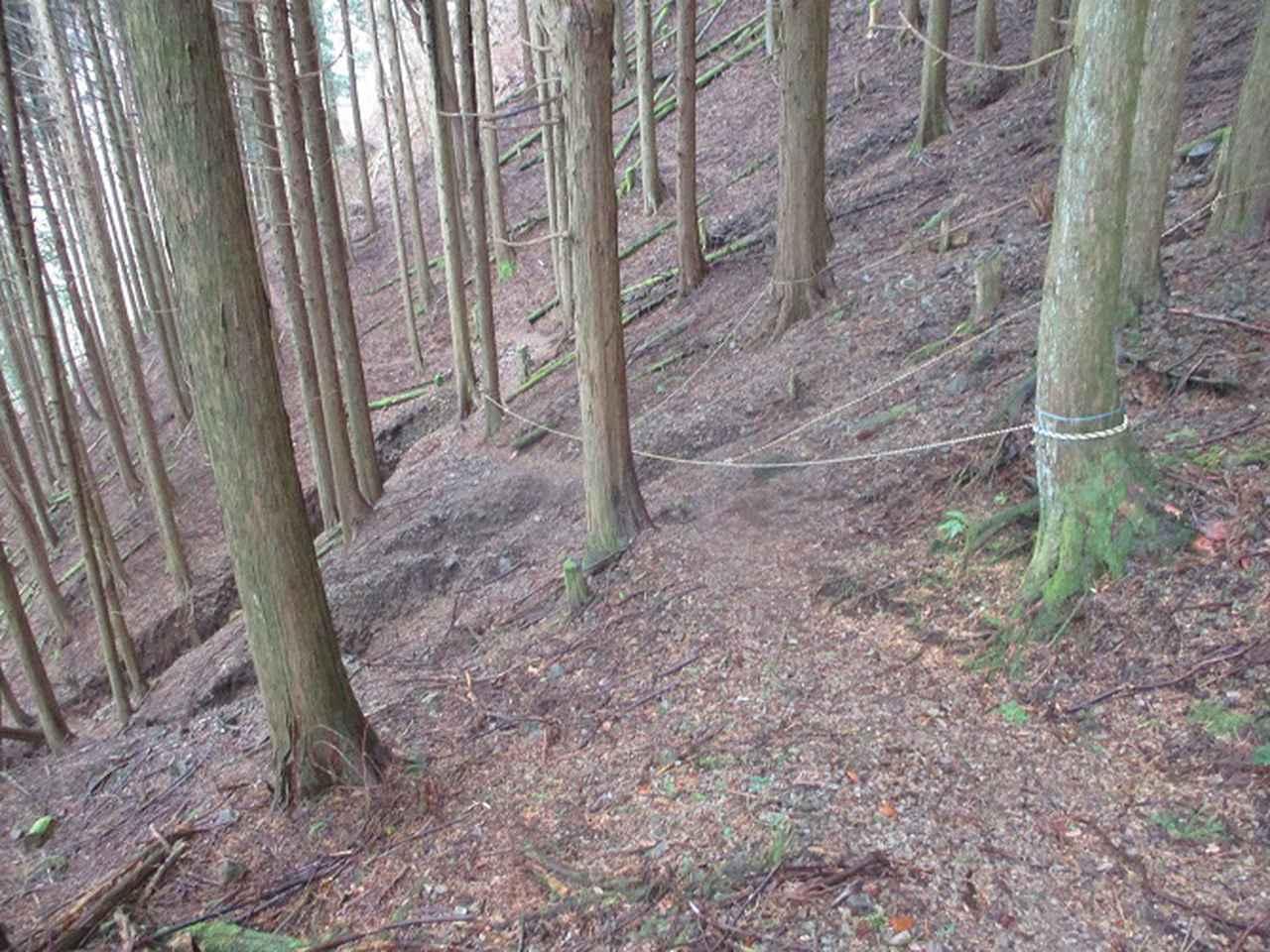 画像14: 来年冬の企画素材を探して静岡県の山を歩いてみました!