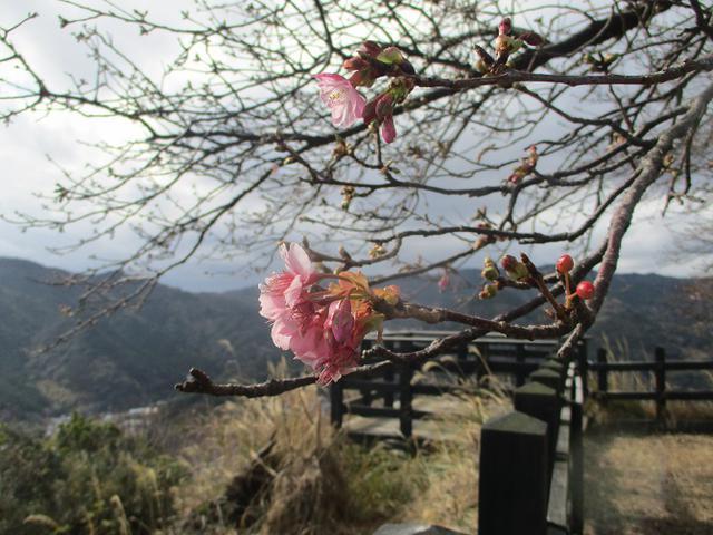 画像16: 来年冬の企画素材を探して静岡県の山を歩いてみました!