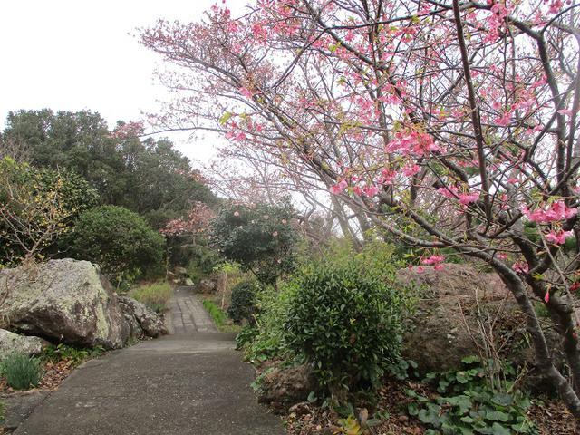 画像8: 来年冬の企画素材を探して静岡県の山を歩いてみました!