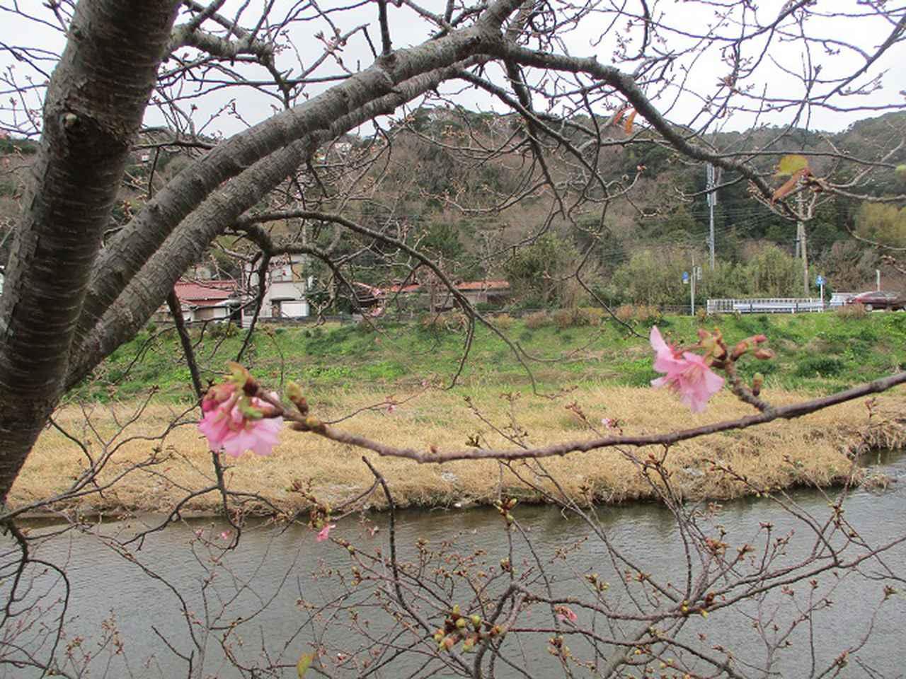 画像18: 来年冬の企画素材を探して静岡県の山を歩いてみました!